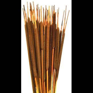 Cattails Pencil (25 pcs) Assorted Case