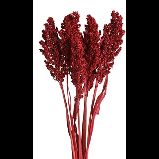 Milo (7 stem) Red