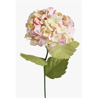 Paper Hydrangea - Old Rose