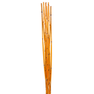 Bamboo Reed (10 stem) Orange