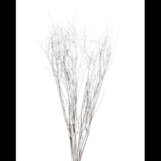 Jay Branches (5-7 stem) White Wash