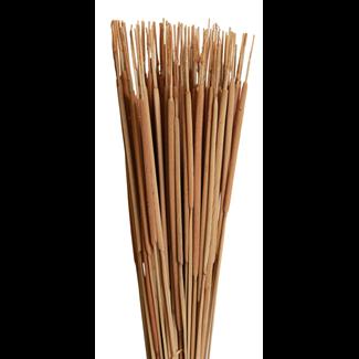 Cattails Pencil (100 pcs) Natural