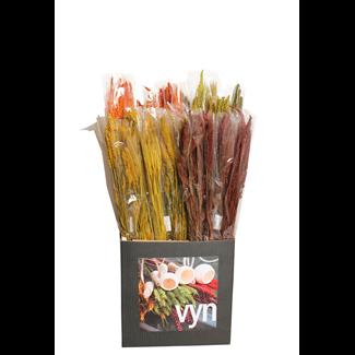 Displayer - Grasses & Grains (50 Pack) Autumn