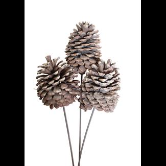 Jeffrey Pine Cone X-Large (3 stem) White Wash