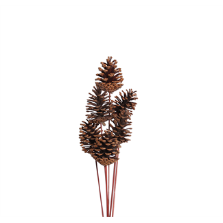 Pine Cones Medium 7-10cm (8 stem) Natural