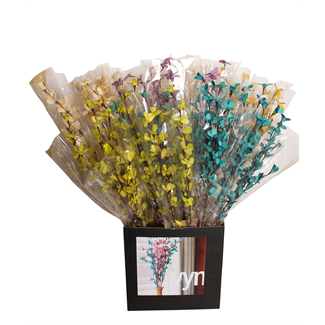 Displayer - Blossom Branch (Assorted Case) 5 Colours
