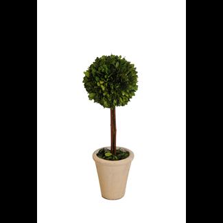 """Topiary - Boxwood - 16"""""""