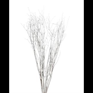 Birch branches (5-7 stem) white wash