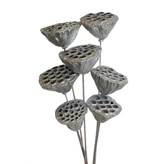 Lotus pods (7 stem) Silver Painted