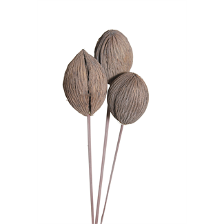 Mintola Balls (6 stem) Grey Wash