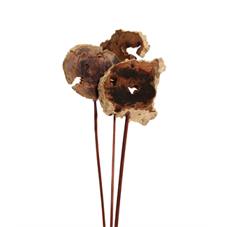 Driftwood Slices (3 stem) Bleached
