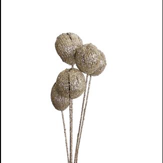 Mintola Balls (6 stem) Champagne Glitter