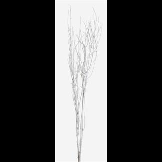"Twinkly Twigs 36"" (2-3 stem) White"