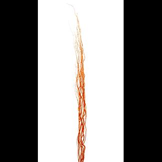 Curly Willow (5 stem) Orange