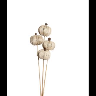 Pumpkins (4 stem) White