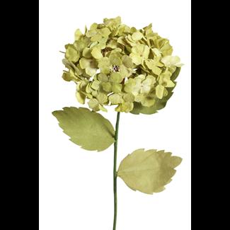 Paper Hydrangea - Lemon Green