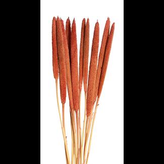 Cigars (10 stem) Orange