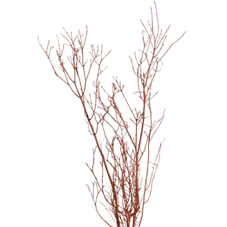 "Twinkly Twigs 36"" (2-3 stem) Copper"