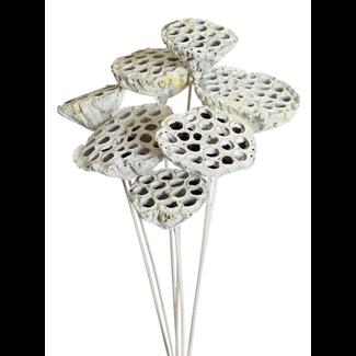 Lotus pods (7 stem) White glitter