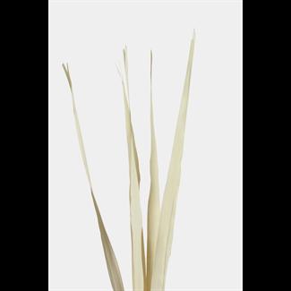 Sunpalm Leaves (7 stem) Bleached
