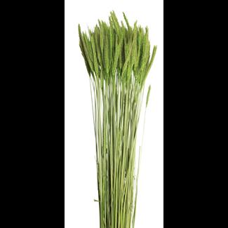 Rye (6 oz) Moss Green
