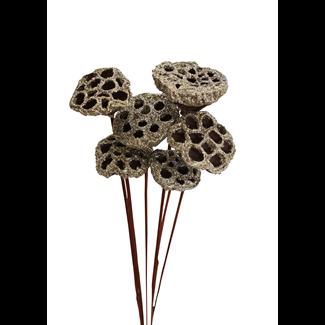 Lotus Pods (7 stem) Champagne Glitter