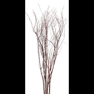 Jay Branches (5-7stem) Mahogany