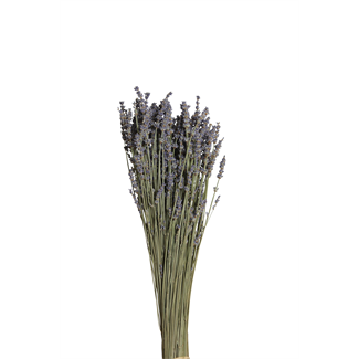 Lavender Bunch (Regular Size)
