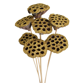 Lotus pods (7 stem) Gold glitter