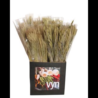 Displayer - Grasses & Grains (50 Pack) Natural